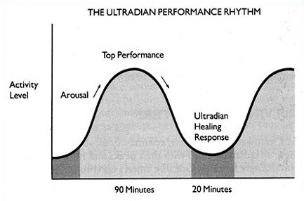 Ultradian rhythm: the BRAC (E.L.Rossi  -The 20 Minute Break